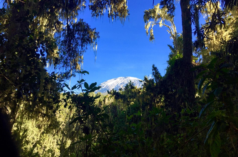 Blick durch den Wald auf den Kibo