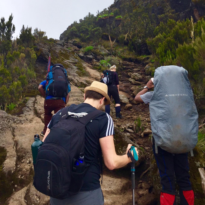 L'ascension ensemble, le long de la route Machame
