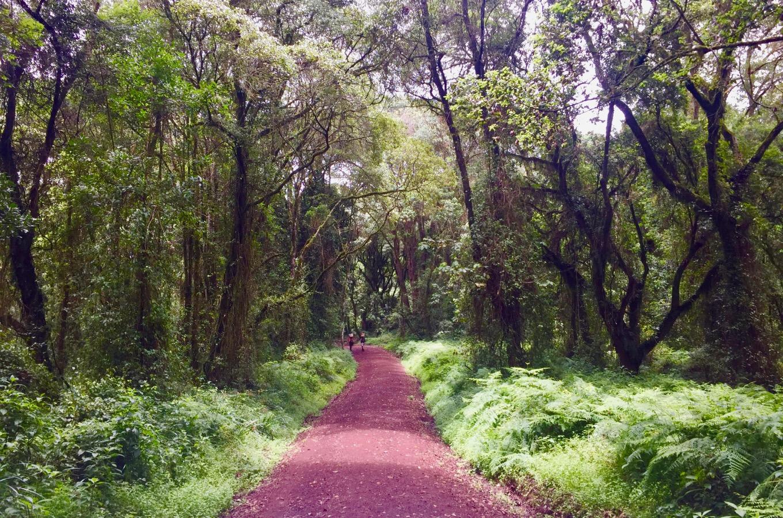 Vegetation types tropical mountain rainforest