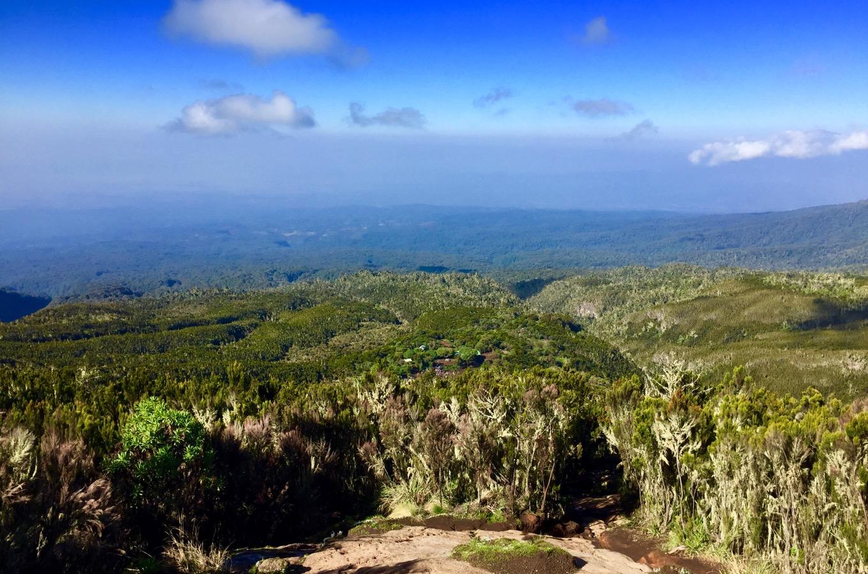 Vegetationszonen Kilimandscharo Moorland