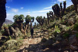 Plants and vegetation Mount Kilimanjaro