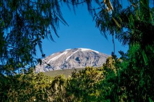 Kibo peak in Kilimanjaro taken from rain forest, Tanzania, Africa