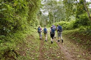 Climbing Kilimanjaro - hiking up the path through the Rain Forest