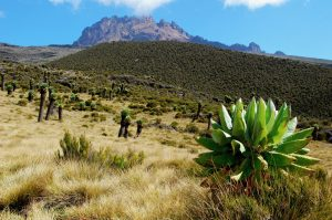 View to Mount Mawenzi at Mount Kilimanjaro