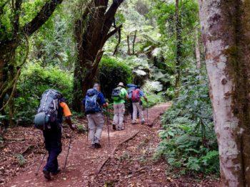 Wanderer im Regenwald auf dem Weg zum Gipfel des Kilimandscharos