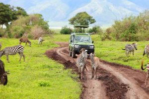 Safari in Ngorongoro Crater in Tanzania