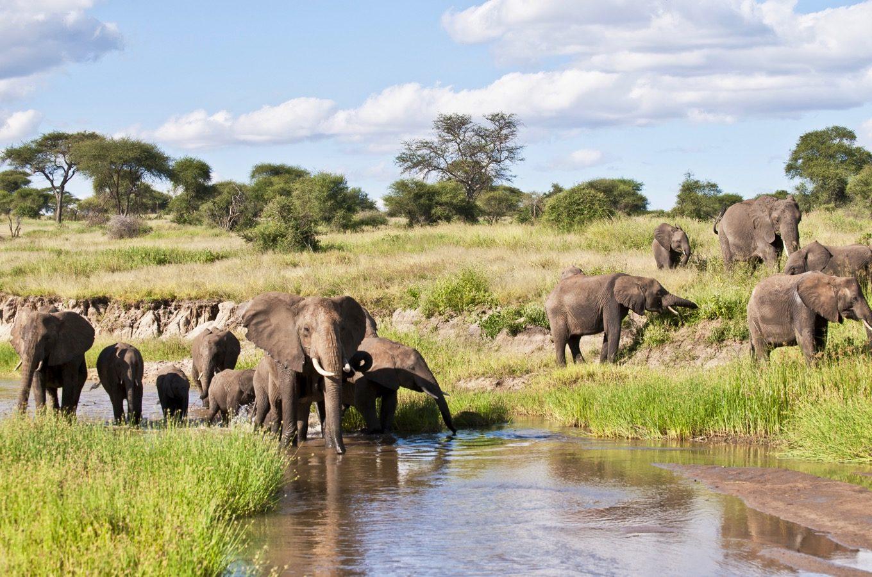 Les éléphants du parc national du Tarangiré jouent dans l'eau