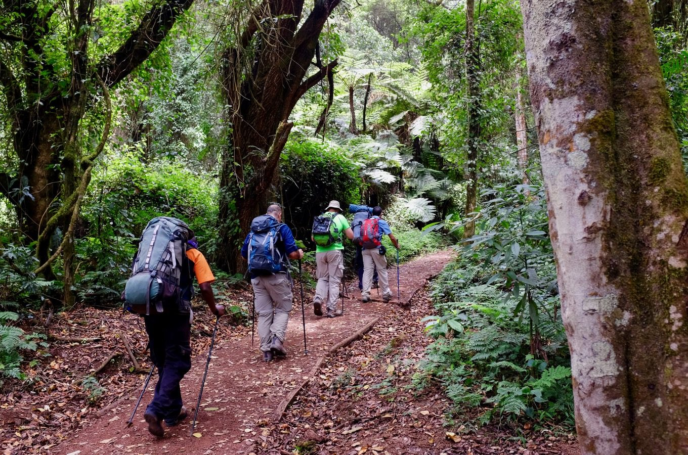 Hiking on the Lemosho route at Kilimanjaro