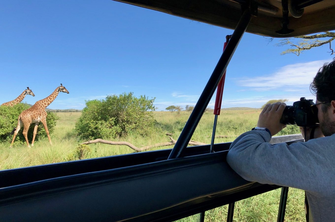 Observation of giraffes during a safari in the Serengeti