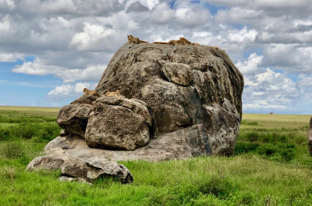 Lions lying on a stone in the Serengeti