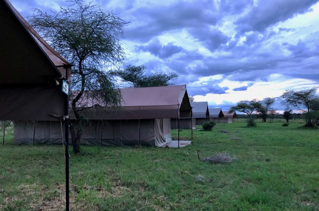 The Serengeti Thorn Tree Camp at dusk