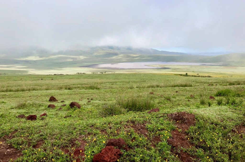 The Landscape of the Ngorongoro Conservation Area in the Early Morning