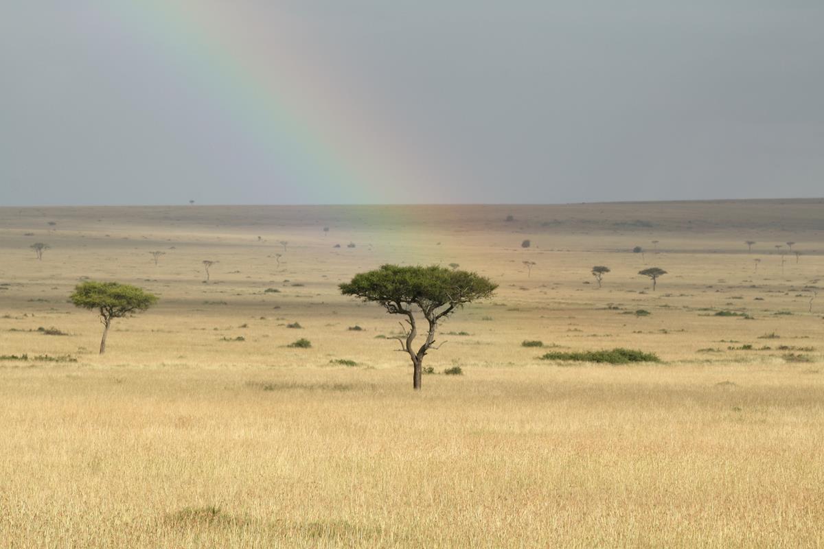 arc-en-ciel sur le Maasai mara Kenya