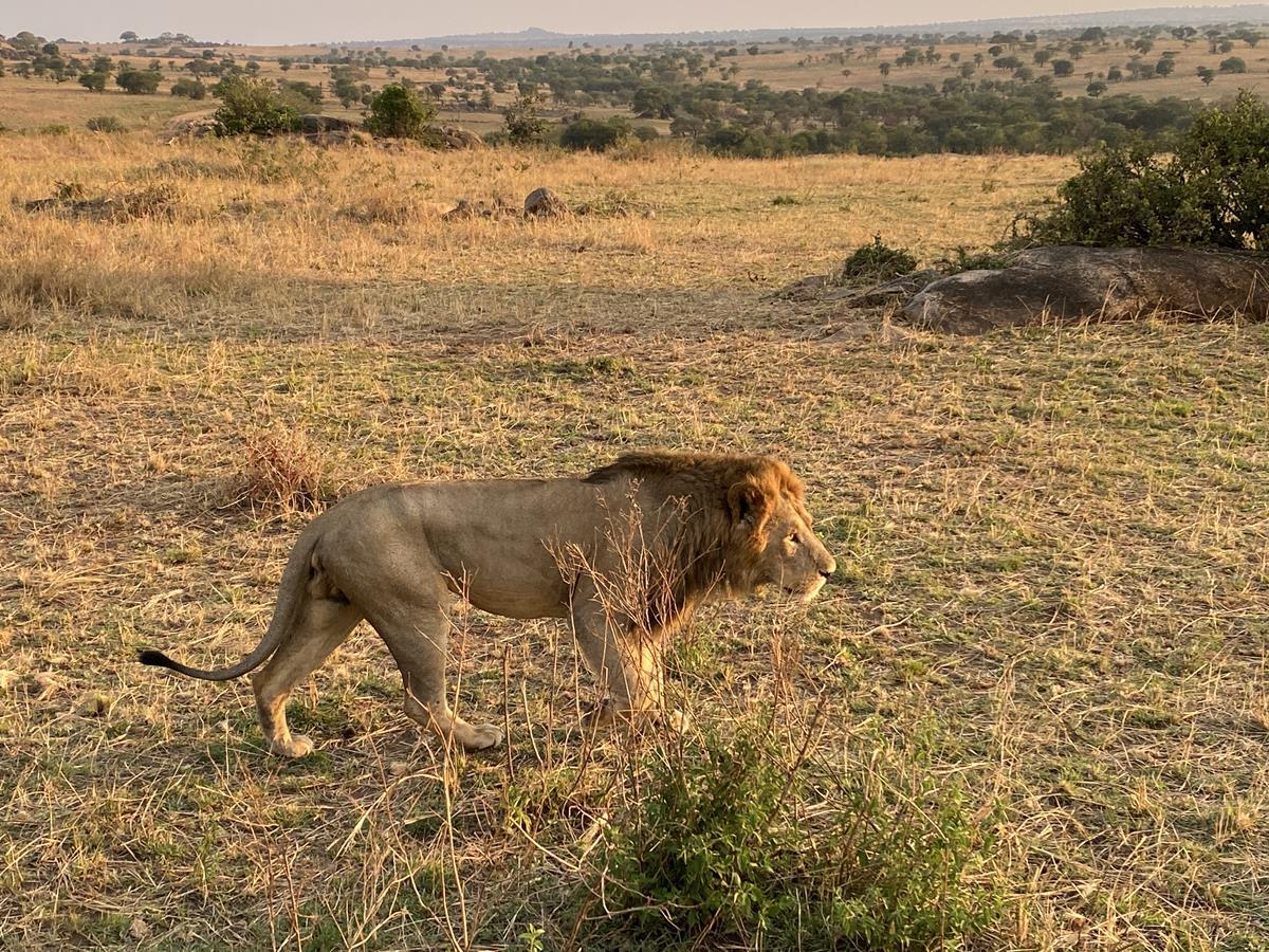 Barbara König der Löwen